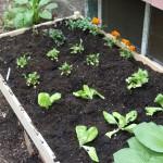 garden deatured