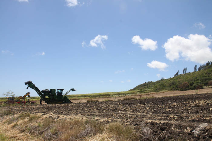 sugar cane field being harvested