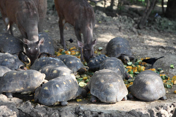 the animal refuge turtle buffet
